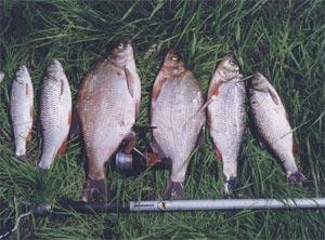 способы рыбалки на оке
