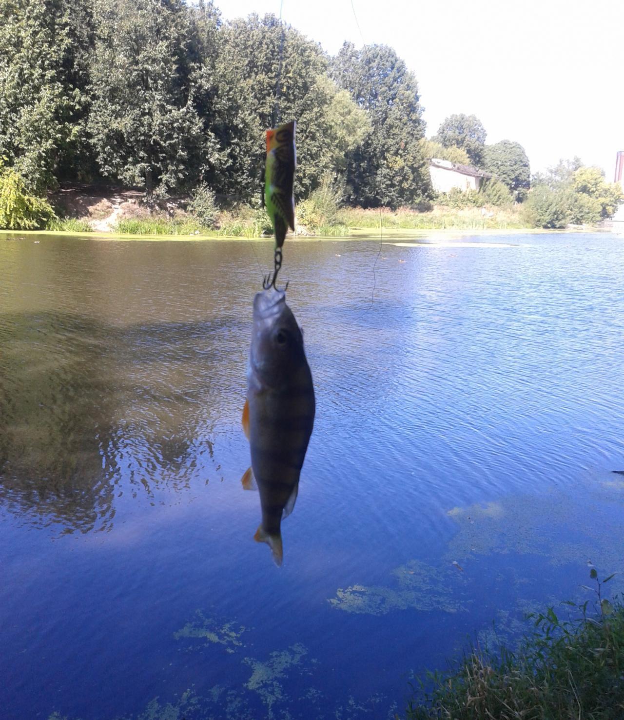 прогноз рыболовного клева в рязани