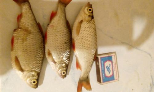 рыбалка и грибы в рязани