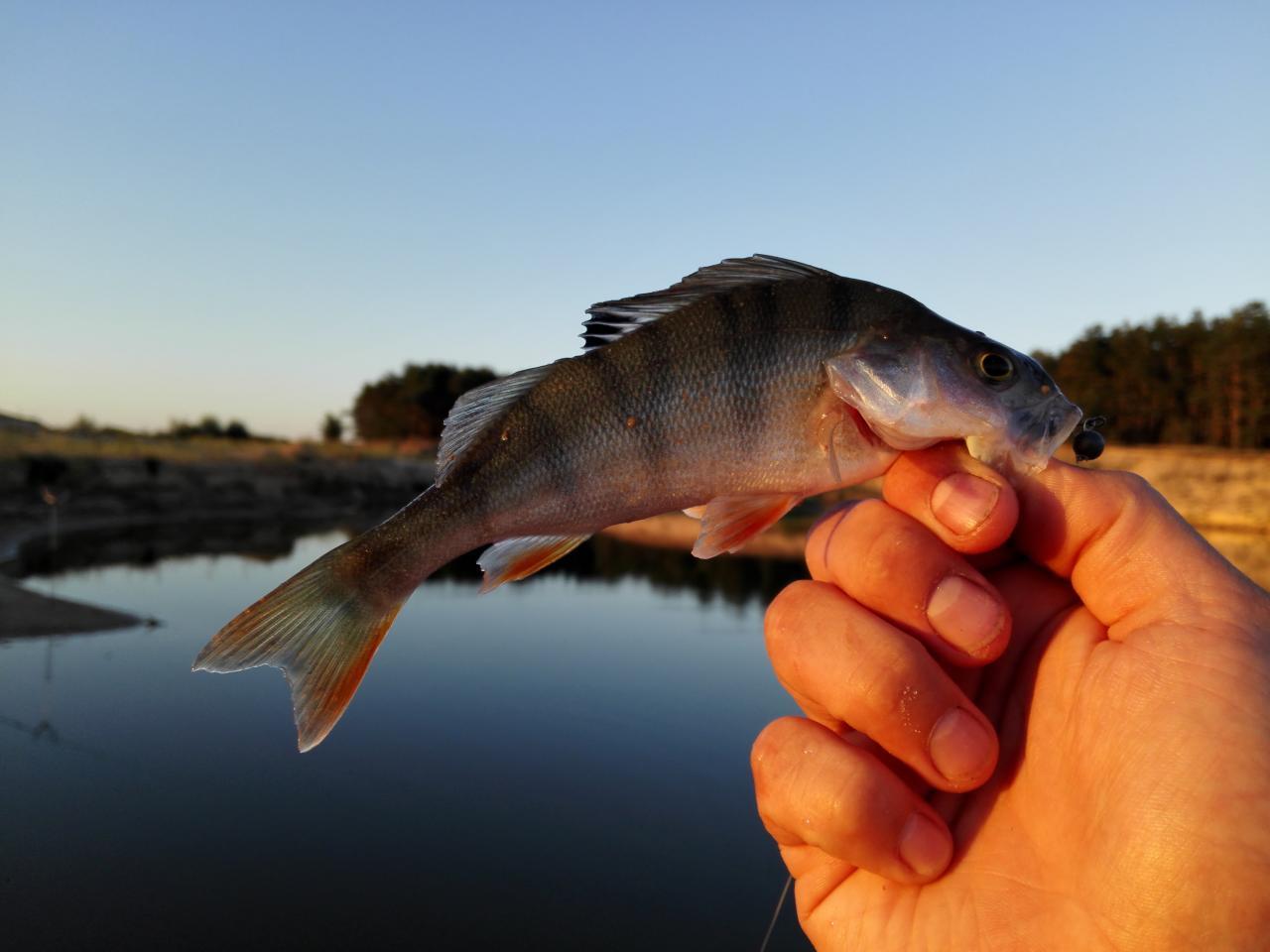 евгений рыбалка липецк